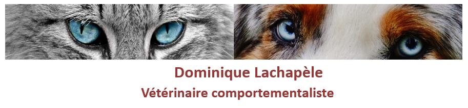 Dominique Lachapèle vétérinaire comportementaliste